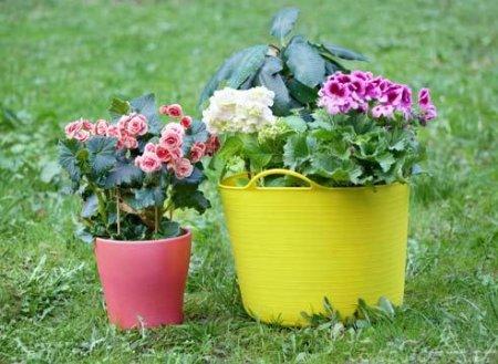Перевозка домашних растений и цветов для клумбы
