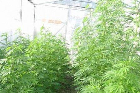 Теплица для выращивания трав