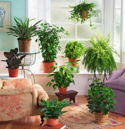 Подбираем растение в каждую комнату